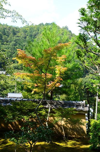 化野念仏寺の色づき