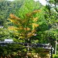 Photos: 化野念仏寺の色づき