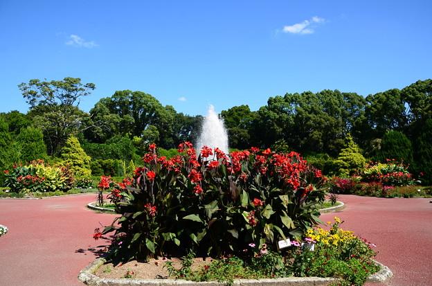 晩夏の府立植物園