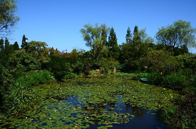 初秋のモネの池