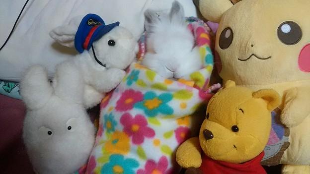 @yr_mochii 本日我が家の愛兎カルボナーラが月に帰ってしまいました。もっちぃと同い年でした。オンラインで購入したもっちぃ人形も一緒です