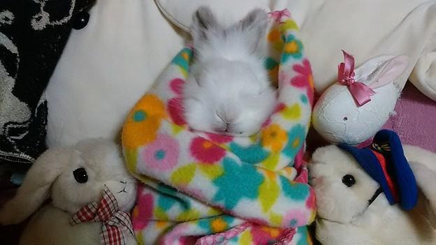 @rsc1900 白ウサギの人形に囲まれてます。