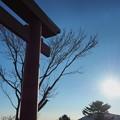 Photos: 朝日と鳥居