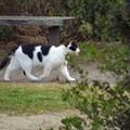 白黒猫ちゃん3_7675