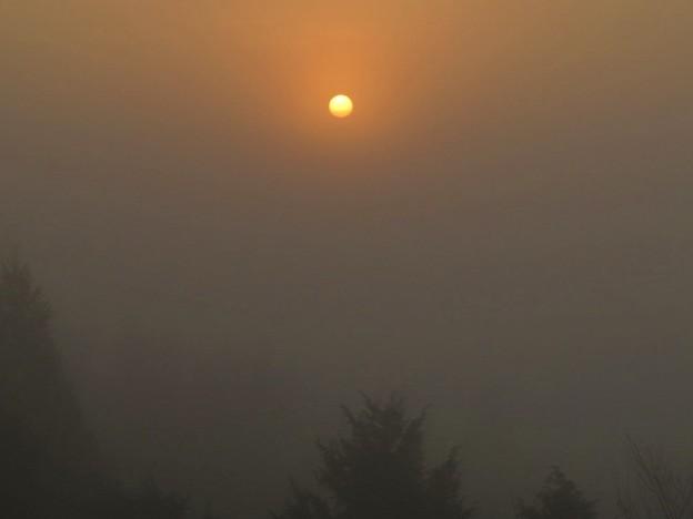 写真: 朝霧日の出_3688