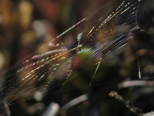輝く蜘蛛の巣_3735