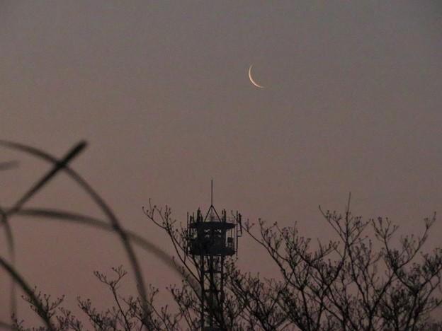 朝の月ペーパームーン_4768