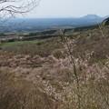 写真: くじゅう山桜_6014