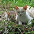 野良猫親子_9192