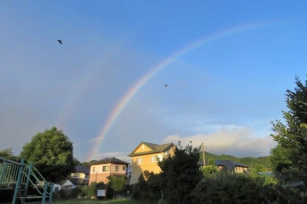 朝の虹_9808