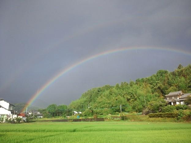 Photos: 虹_CA3J0039