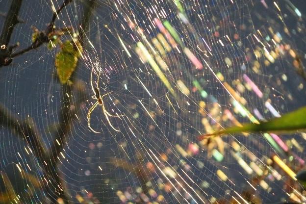 蜘蛛の巣_0708