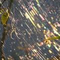 写真: 蜘蛛の巣_0708