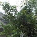 写真: 台風24号風雨_2258