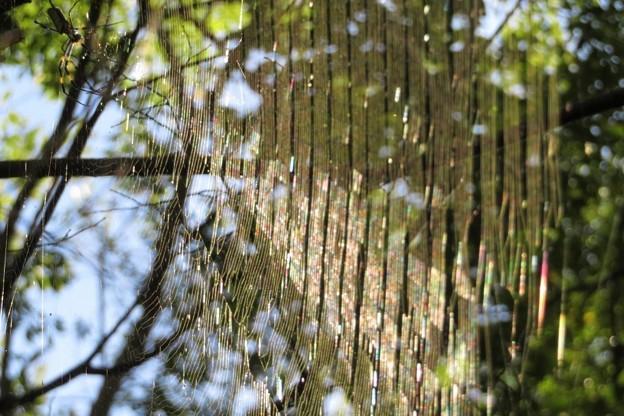 蜘蛛の巣_2755