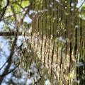 写真: 蜘蛛の巣_2755