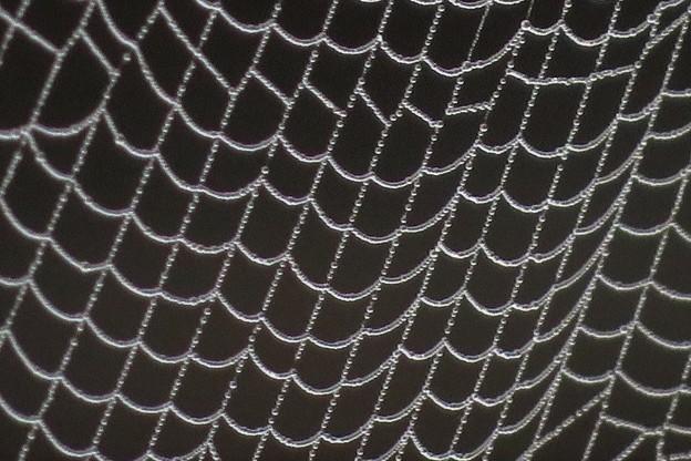 蜘蛛の巣に霧雫_3969