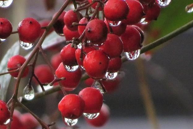 雨雫_4551