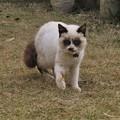 タヌキ猫(実家)_5179