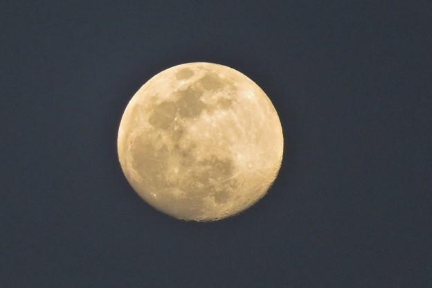 Photos: 菜の花や月は東に日は西に_8293