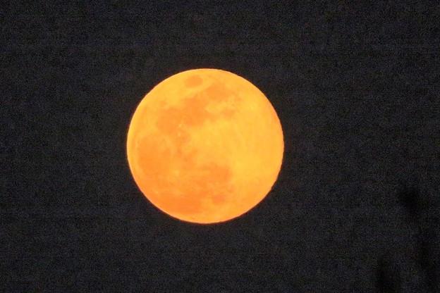 夕満月_9598