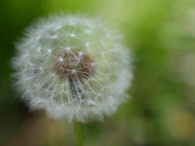 A puffball