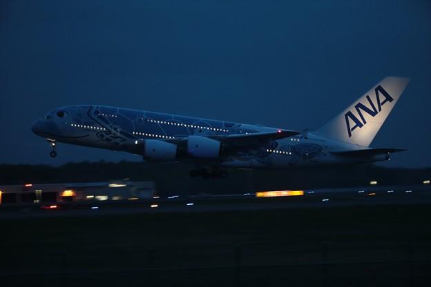 ANAの超大型機A380