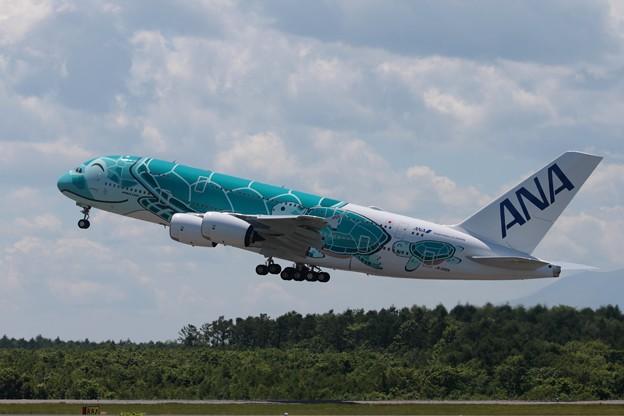Photos: ANA A380     JA382A
