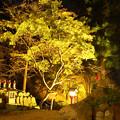 写真: 石観世音ライトアップ3