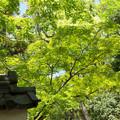Photos: 春日大社3