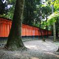 写真: 伏見稲荷6