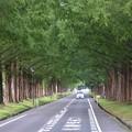 高島市散歩 緑のトンネル