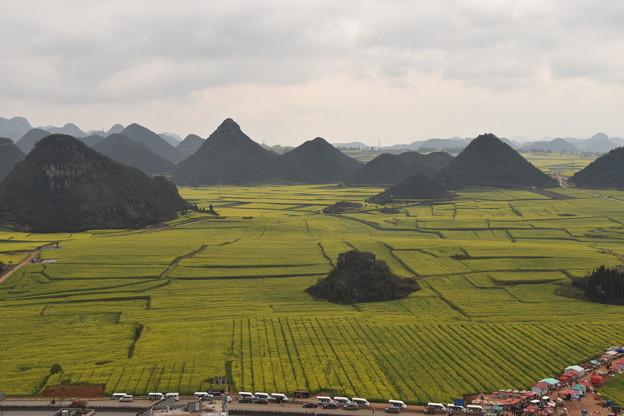 雲南省羅平 金鶏峰の菜の花畑#8