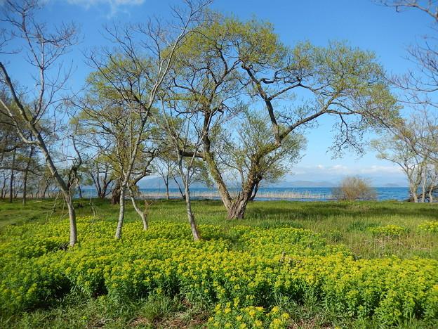 写真: 空 琵琶湖 ノウルシ