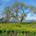 Photos: 空 琵琶湖 ノウルシ