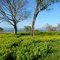 写真: 空 ノウルシ 朽ち木 琵琶湖