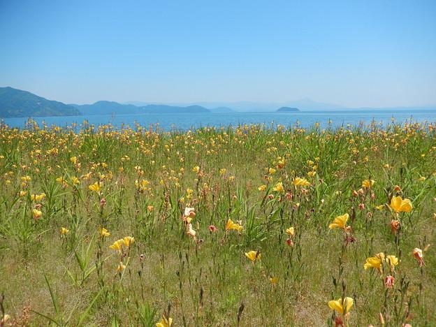 花畑 琵琶湖