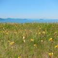 写真: 花畑 琵琶湖