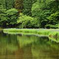 写真: 平池 カキツバタ 新緑