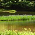 写真: 平池 カキツバタ 静寂