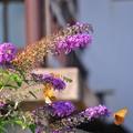 写真: 蝶を引きつける花