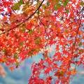 Photos: 緑と赤のグラデーション