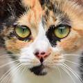 写真: 透き通る色の瞳、