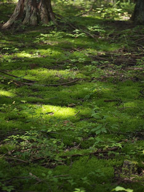 151002_山梨県北杜市・白州・尾白の森名水公園「べるが」_コケ仲間_FA0263414_MZD60M_X6As