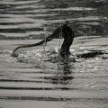 サンヨン で撮った 水鳥類-3