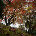 Photos: 181116_箱根・小田急山のホテル_紅葉風景_F181116I0837_MZD12ZP_X9Ss