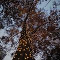 Photos: 181130_東京・表参道_イルミネーション_G181130XA9329_MZD8FP FR2_X9Ss