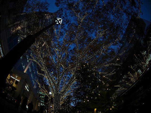 Photos: 181130_東京・表参道_イルミネーション_G181130XA9337_MZD8FP_X9Ss