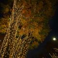 Photos: 181130_東京・表参道_イルミネーション_E181130D8493_MZD12ZP_X9Ss
