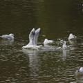 写真: 胴体着水